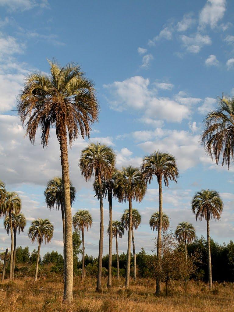 La sonrisa de la palmera Kolonaki Madrid